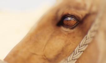 """Assassin's Creed Origins : les plus belles images du mode """"Photo"""""""