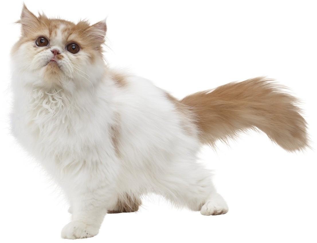 Nintendogs Cats Ds Astuces