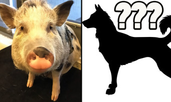 The Last of Us 2 : après les cochons, voici un chien motion-capturé