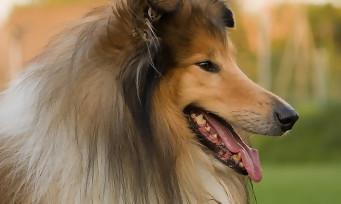 """Wolfenstein 2 : l'épisode de la série qui parodie """"Lassie"""""""