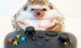 Xbox + SEGA : Microsoft continue de teaser bien fort, un rachat toujours en vue