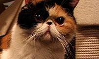 Tokyo Game Show 2012 : découvrez les bars à chats japonais en vidéo