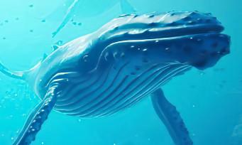 Beyond Blue : un trailer qui nous plonge dans les profondeurs des océans