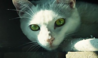 Ghost Recon Wildlands : un nouveau trailer en live action qui fait miaou