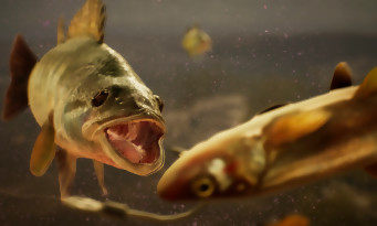 The Catch : Carp & Coarse